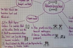 Concept Map Knochen