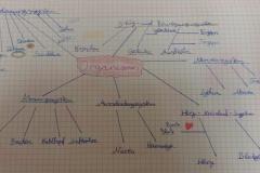 Concept map 5. Klasse Organismus