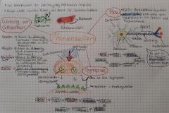 Concept map 7. Klasse Nervenzellen