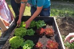 Gemüseanbau für den HE-Unterricht 2018