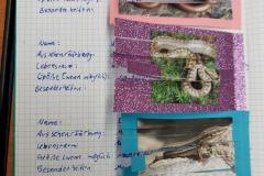 Steckbrief Reptilien