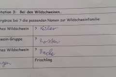 Wildpark 2
